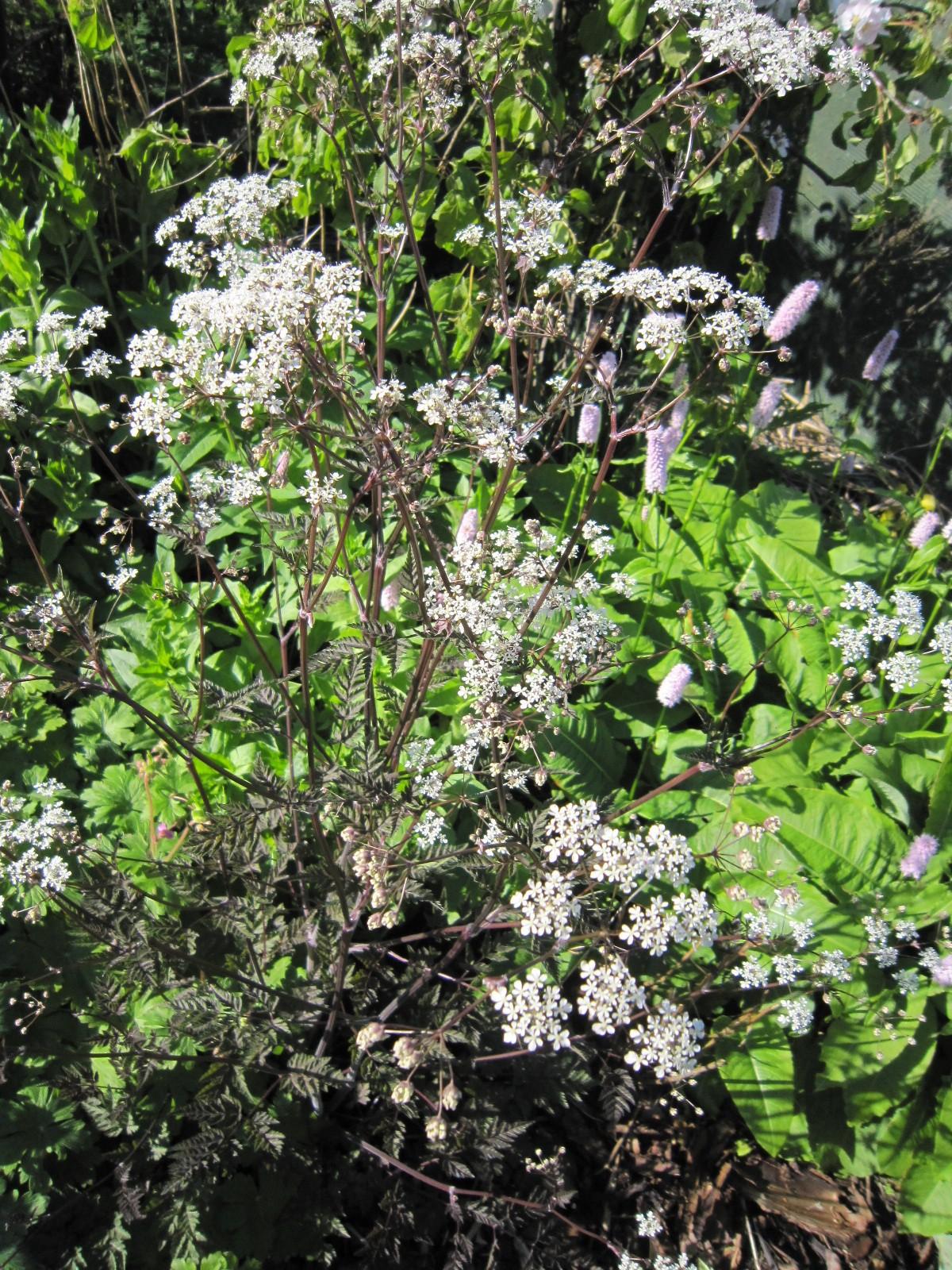 Gardening scotland ingliston edinburgh cc plants for Garden trees scotland